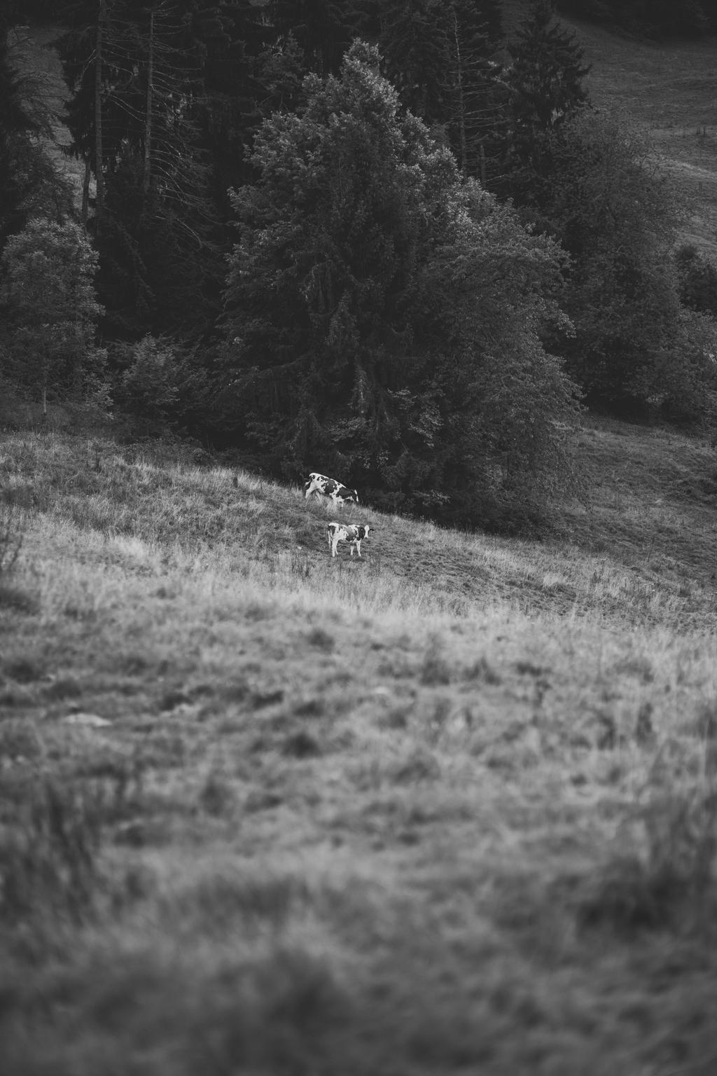 capyture-photographe-alsace-haut-rhin-143